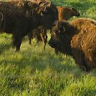 the mighty buffalo by jlukyn