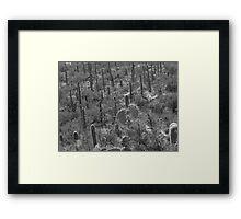 tucson cactus Framed Print