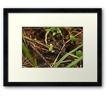 Tiny the Frog #2 Framed Print
