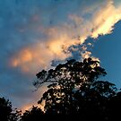 Clouds above the trees by Owen Kaluza