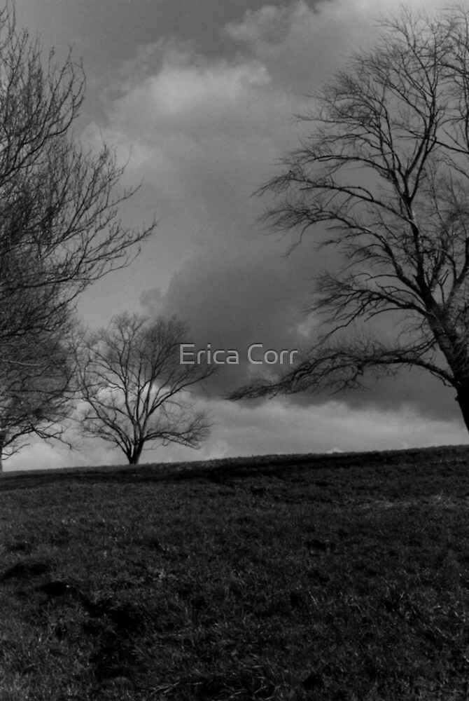 Trees on a Hill by Erica Corr