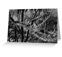 Vectors Of Ice Greeting Card