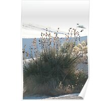 In White Sands, New Mexico Poster
