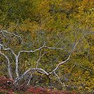 Autumn Colours, Iceland in September by Gerda Grice