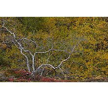 Autumn Colours, Iceland in September Photographic Print