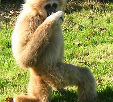 Legless lIttle monkey! by leelee