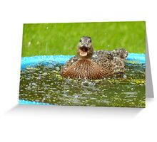 Catching Hail Stones - Rescued Duckling - NZ Greeting Card