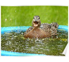 Catching Hail Stones - Rescued Duckling - NZ Poster