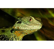 Water Monitor. Photographic Print