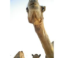 MY Camel  Photographic Print