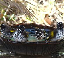 Rub a Dub, Dub Four Birds in a Tub by Coralie Plozza