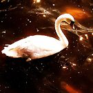 SWAN SWAN  by TIMKIELY