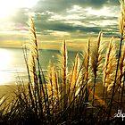 Toi Tois Coastal by Stephen Johns