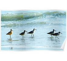 Sandpipers march Poster