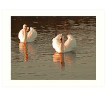 FEATHER  CROWN OF SWAN IN SUNSET Art Print