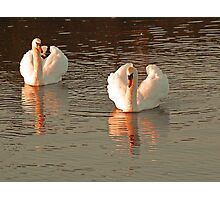 FEATHER  CROWN OF SWAN IN SUNSET Photographic Print