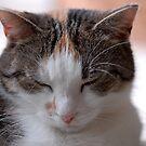 Sweet Dreams Little One! by vbk70
