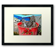 All I Want For Christmas - Rescued Duck - NZ Framed Print