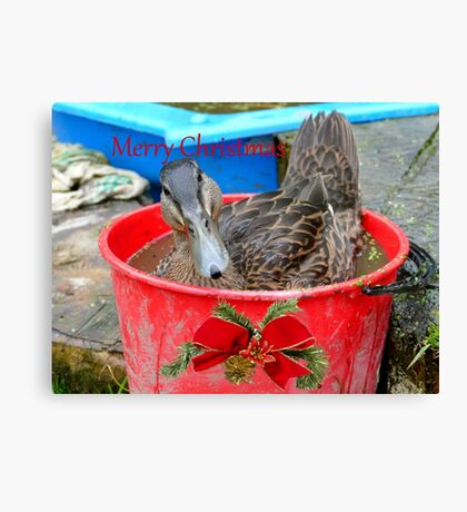 All I Want For Christmas - Rescued Duck - NZ Canvas Print