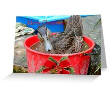 All I Want For Christmas - Rescued Duck - NZ Greeting Card