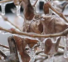 Ice storm by PhylHnt