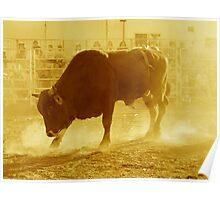 Bronco Bull Poster