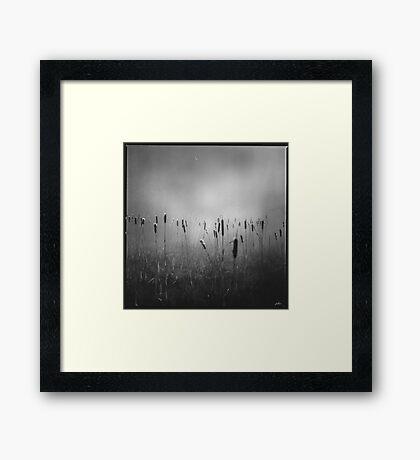 Nevamore Framed Print