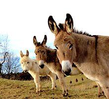 Donkey Trio by ScaryGary14