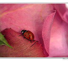 Ladybug on rose. by Ellen van Deelen