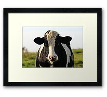 Cow Framed Print