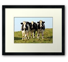 Herded by a herd! Framed Print
