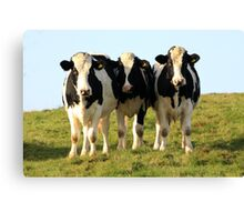 Herded by a herd! Canvas Print