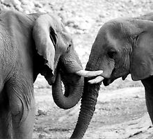 Elephant affection by Michelle Dry