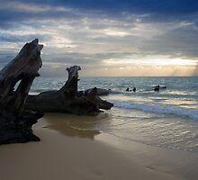 Log's Leading to Sunburst by Greg Halliday