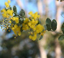 Pretty yellow by minniemanx