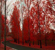 Winding Road by silveraya