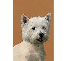 West Highland White Terrier Photographic Print