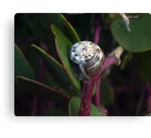 The morning snail Canvas Print