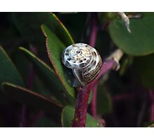 The morning snail Photographic Print
