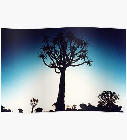 Quiver tree silhouhette Poster