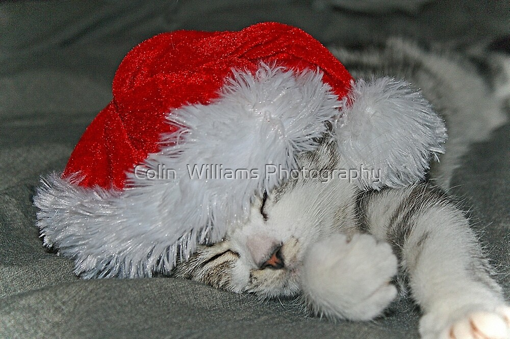 Happy Christmas  From Darcy ! by Colin  Williams Photography