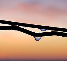 Dew drops by Adri  Padmos