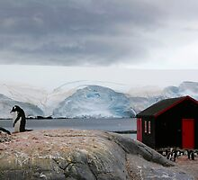 Port Lockroy, Antarctica by parischris