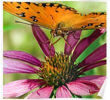 Gulf Fritillary, Butterfly Poster