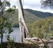 in the bush at Forth Falls, Wilmot, Tasmania - overlooking Lake Barrington by gaylene