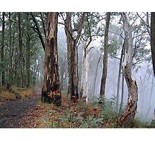 Road To Nowhere - Victorian Alps, Victoria Australia Photographic Print