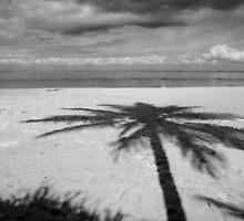 Shadow Palm by Greg Halliday
