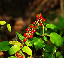 Red Berries by Kate456