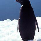 Amazing Antarctica by Doug Thost