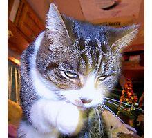 Feline Fur Cleaning Photographic Print